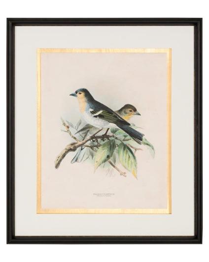Picture of ANTIQUE BIRDS IV